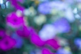 KAC_2013_07_30_0012-2