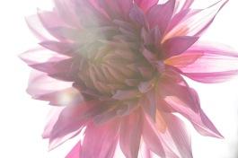KAC_2012_09_11_0278-1